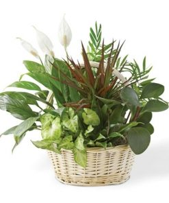 Dish Garden Plant Delivery