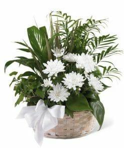 White Blossoms Sympathy Plant Basket